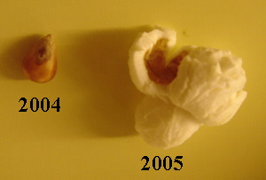 2004: unpopped kernal, 2005: Popcorn morsel.